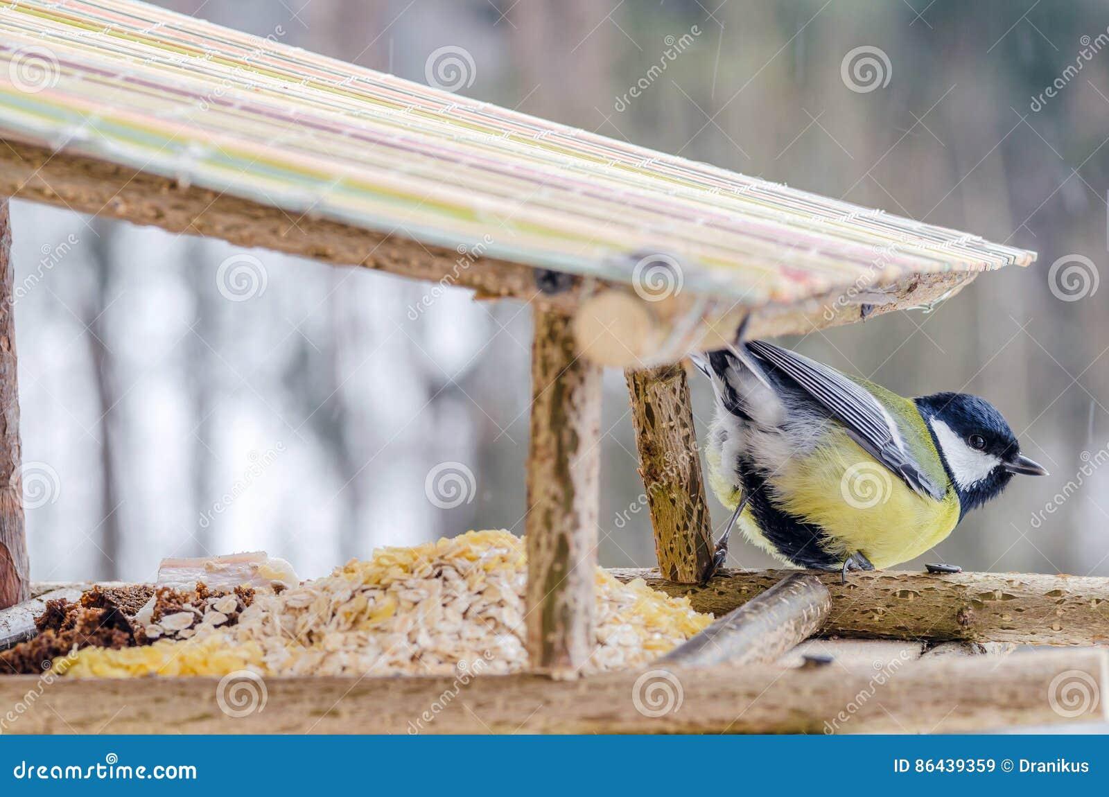 μικρό σώμα μεγάλο πουλί