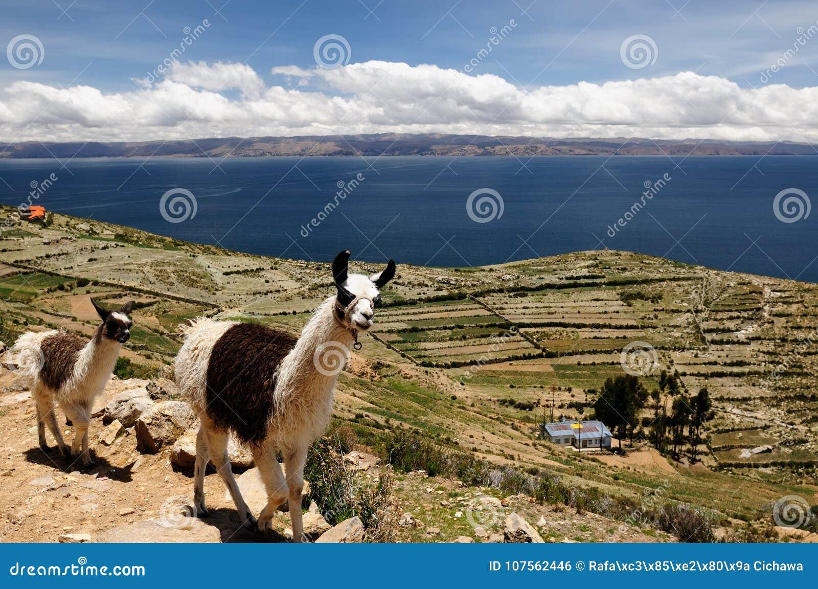 Titicaca för solenoid för bolivia del isla lakeliggande
