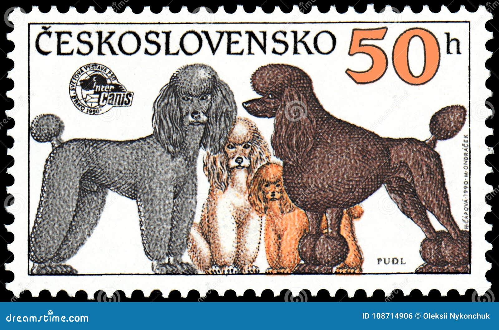TJECKOSLOVAKIEN - CIRCA 1990: stämpla utskrivavet i Tjeckoslovakien, shower pudlar av olika avel, utställning för serievärldshund