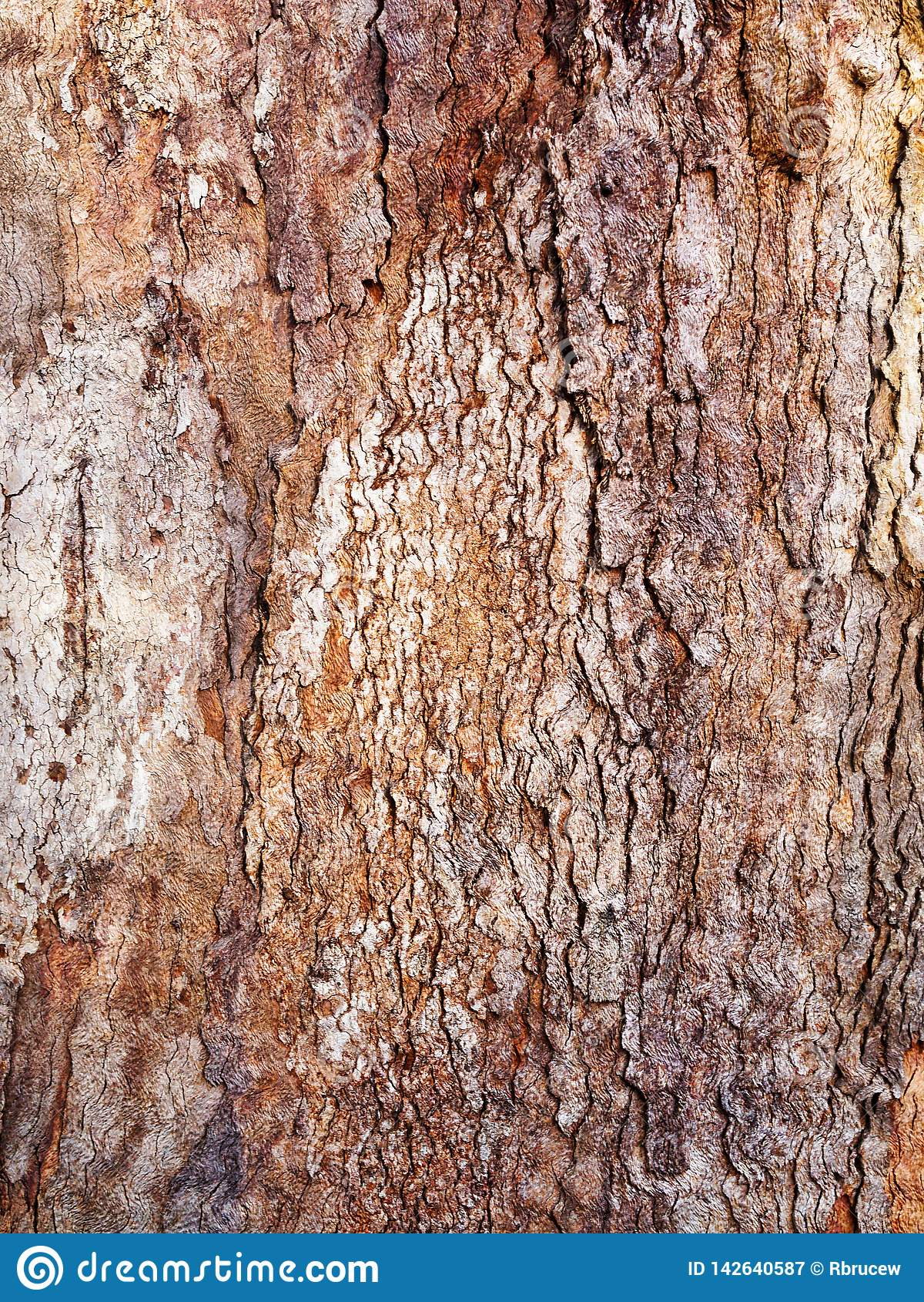 Tjocka texturerade skälllager på det gamla trädet, Sydney, Australien