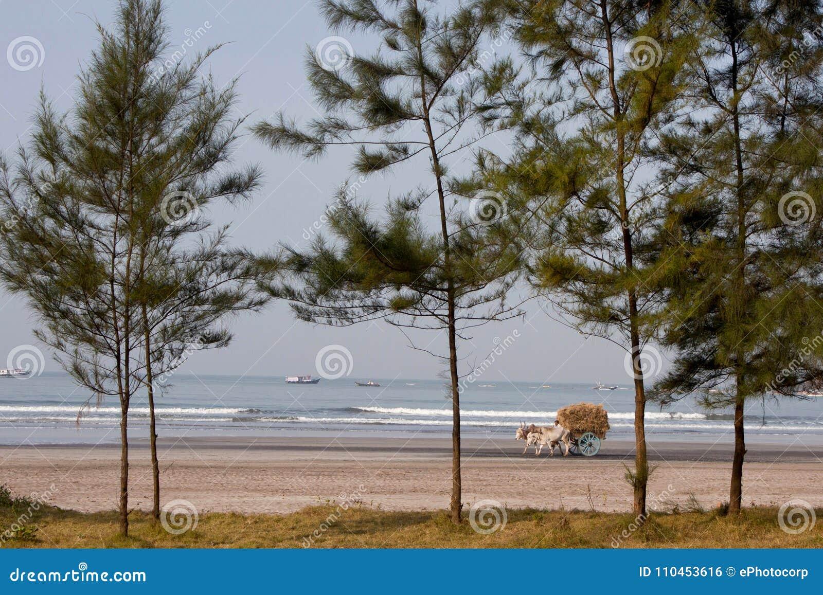 Tjur-vagn på en strand