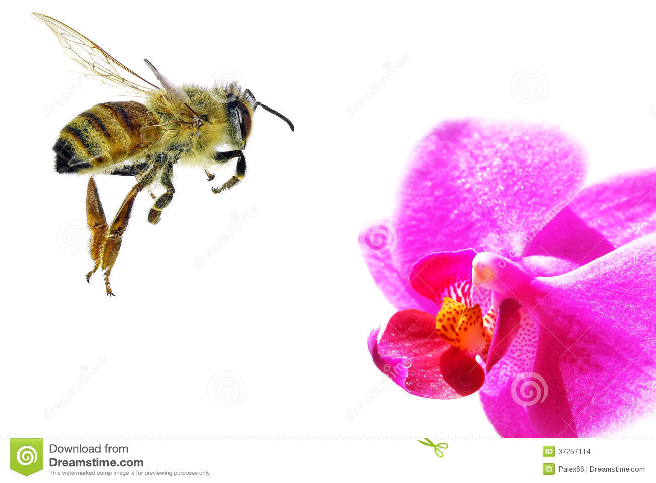 To Honey Stock Images