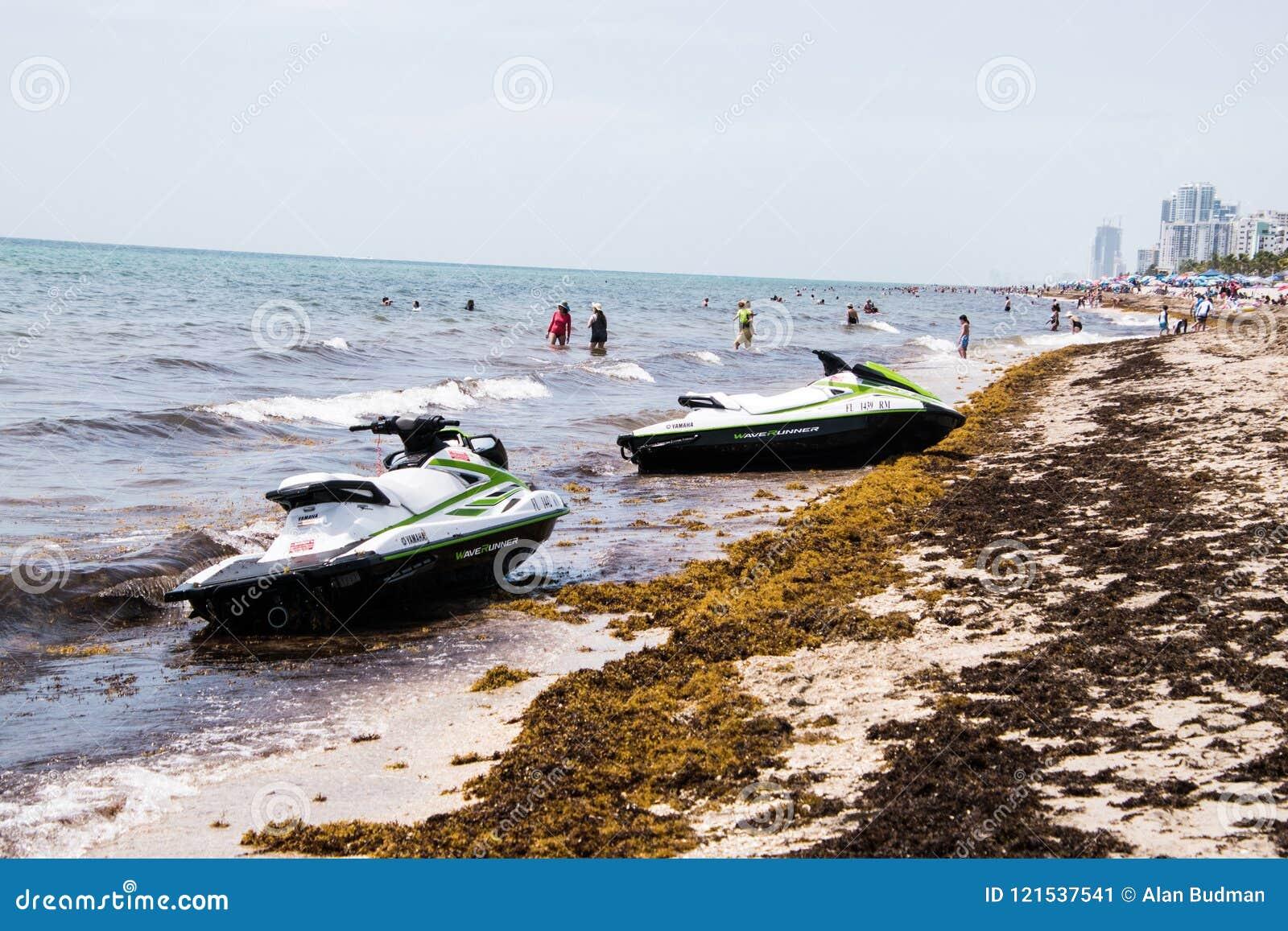 To jest widok ten rok gałęzatki inwazja Floryda ` s plaża