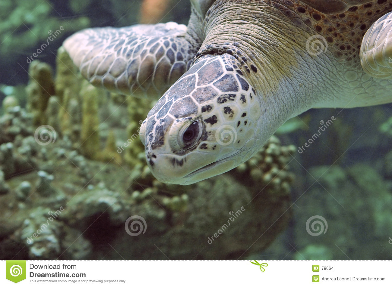 To seaturtle