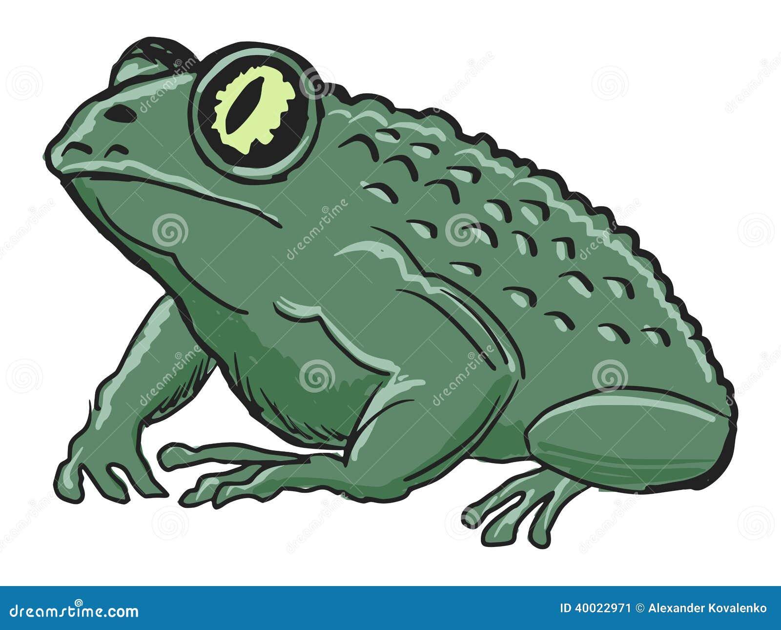 Hand drawn, sketch, cartoon illustration of toad.