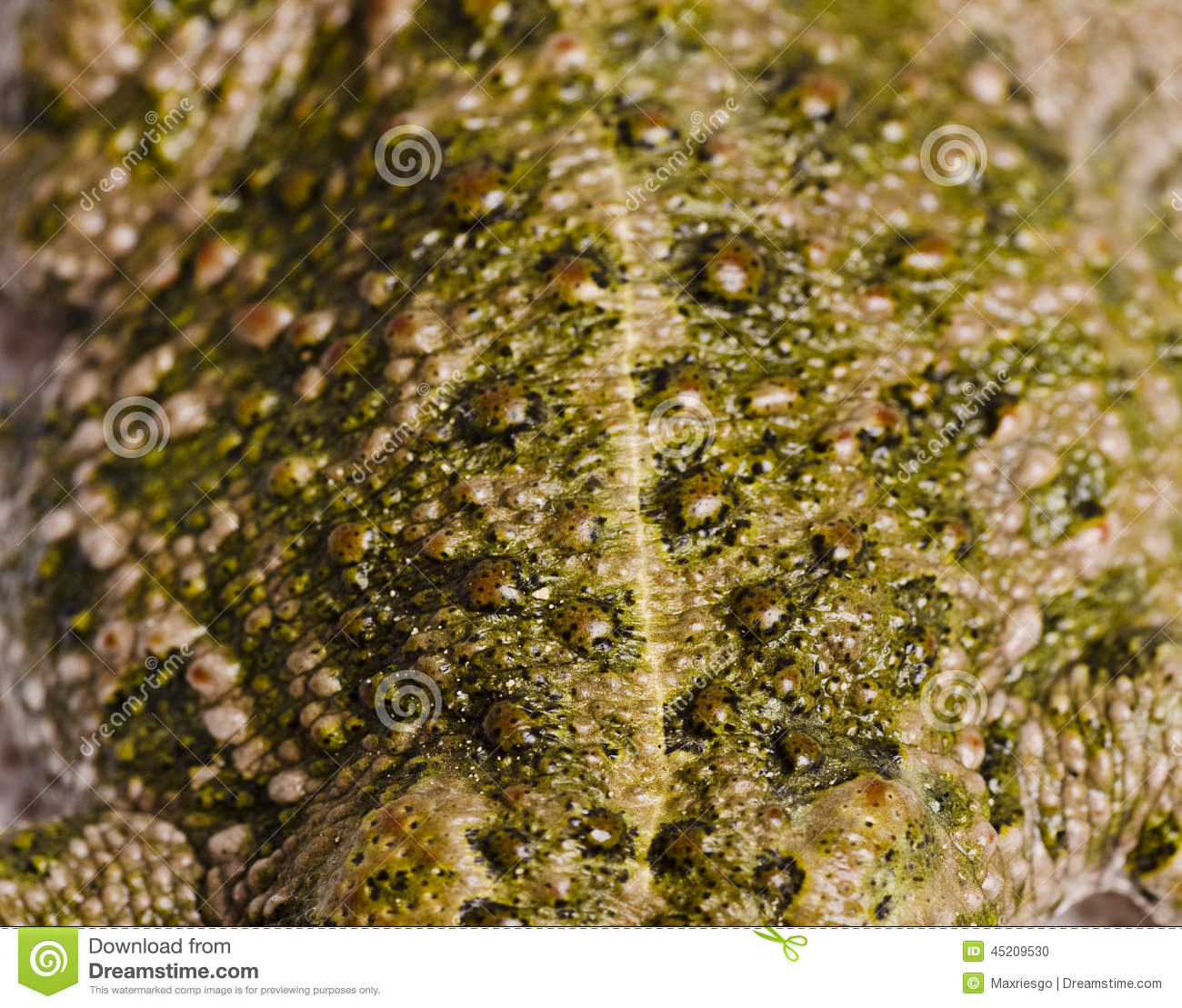 Toad Skin In Macro Frame Stock Photo - Image: 45209530 Real Life Time Travel