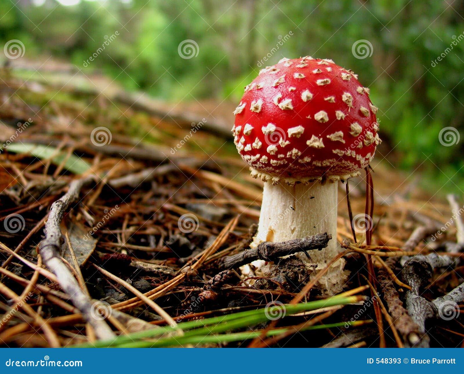 Toadstool en el bosque