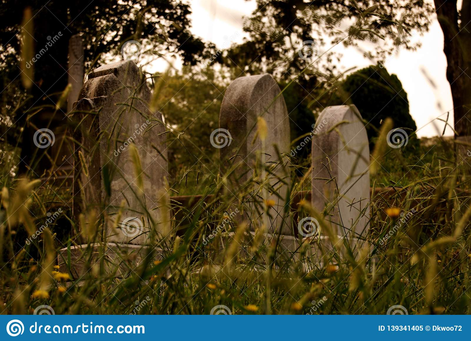 Tombstones among grassy nature