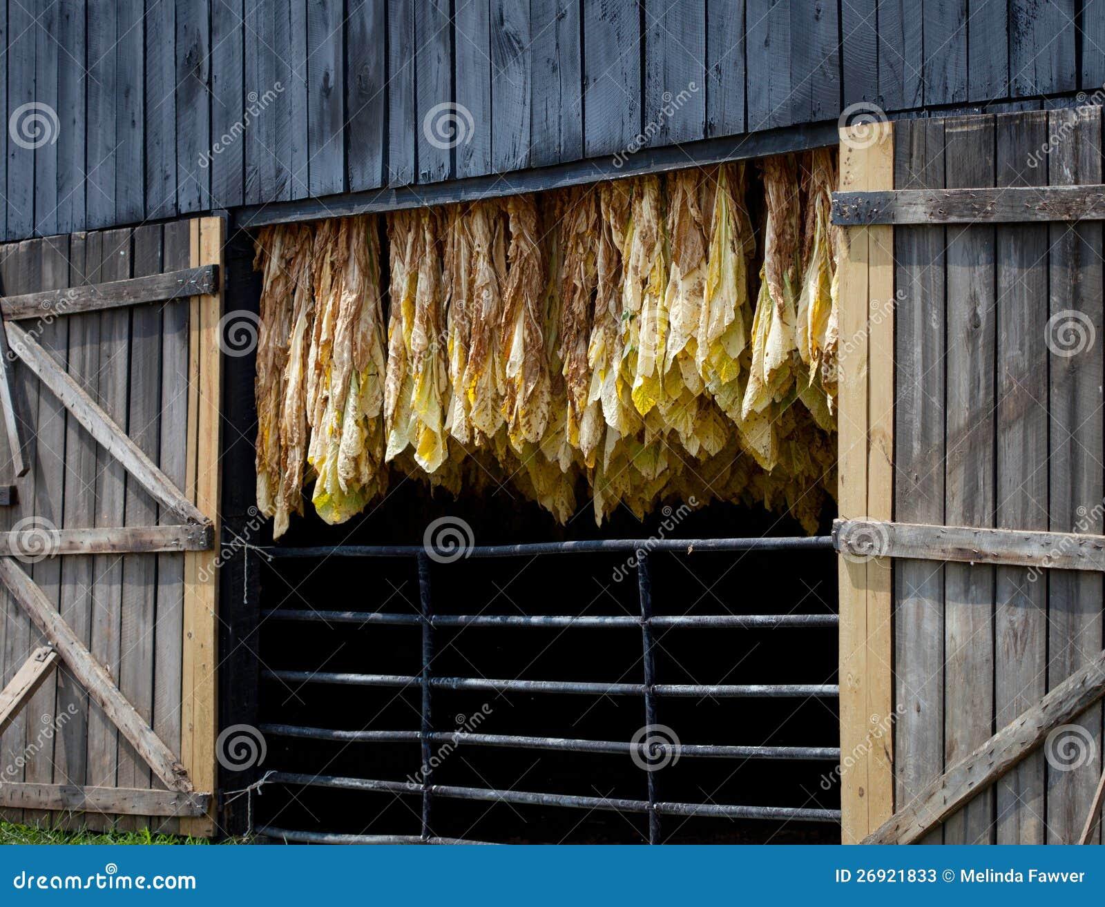 Tobacco Barn Stock Photos Image 26921833