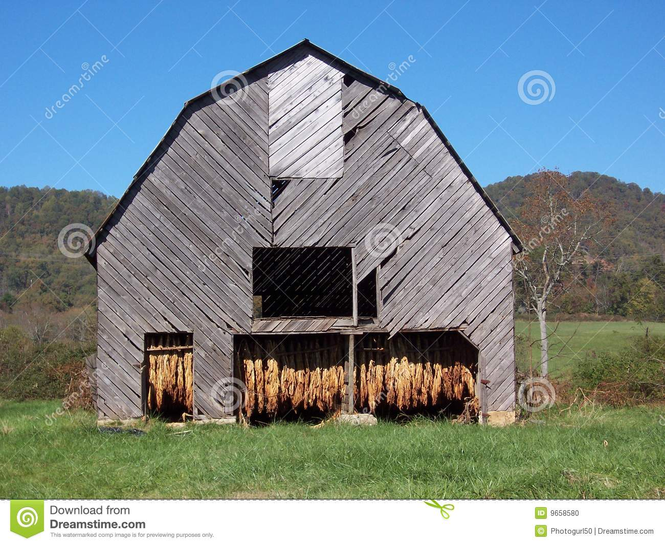 Tobacco barn stock photo image of blue gray fall for Tobacco barn house plans