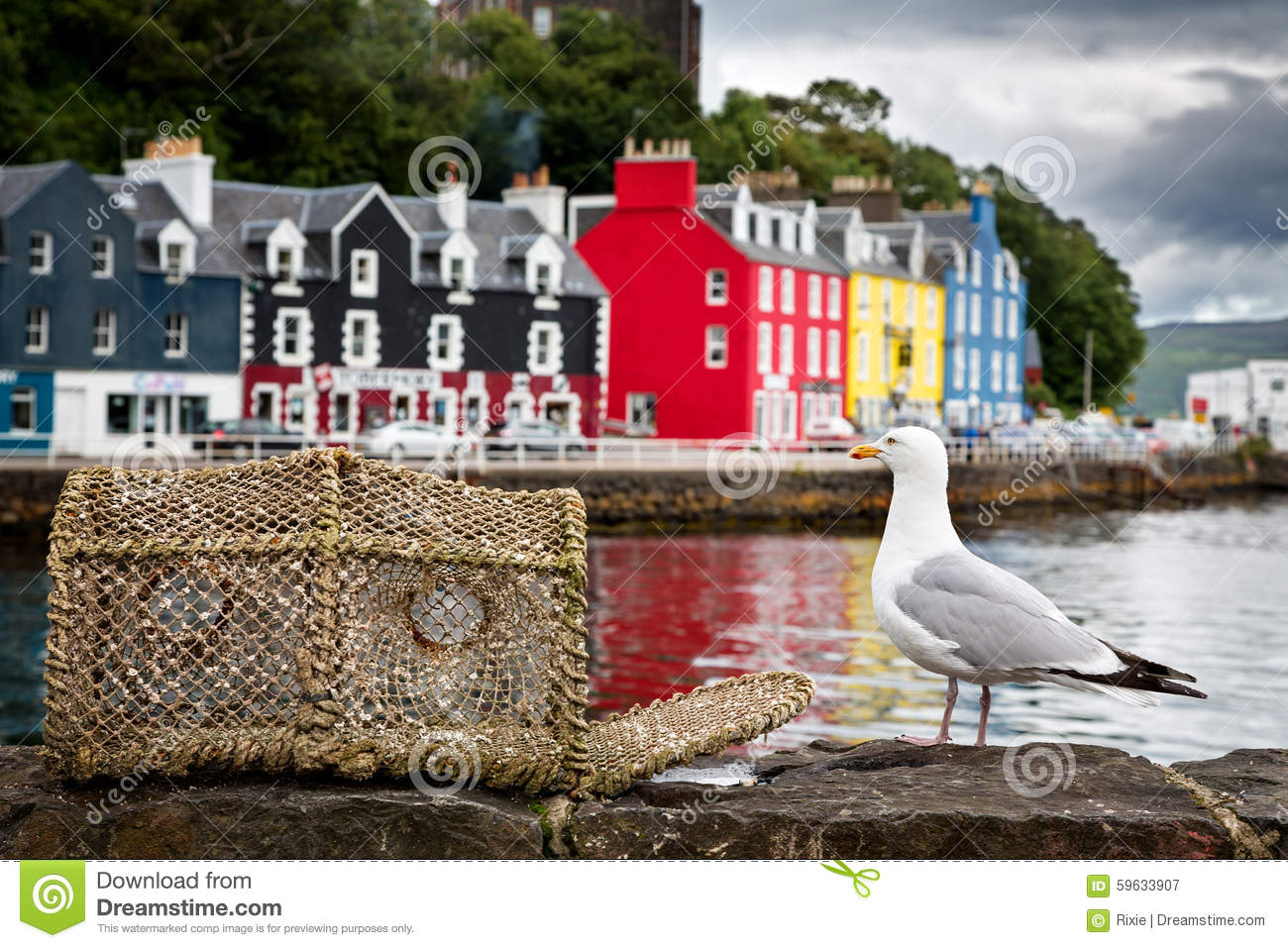 Download Tobermory seagull stock image. Image of hebrides, boat - 59633907