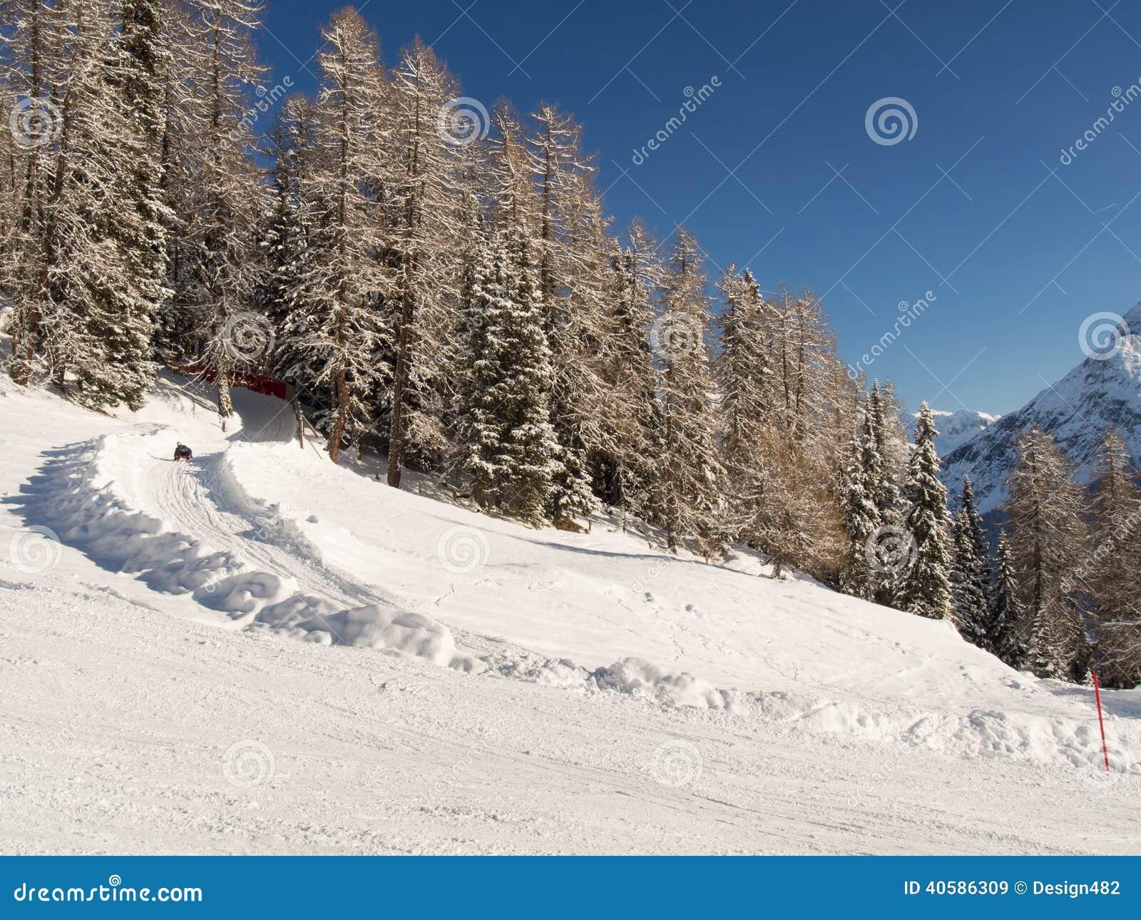 Toboggan, который побежали в лесе зимы