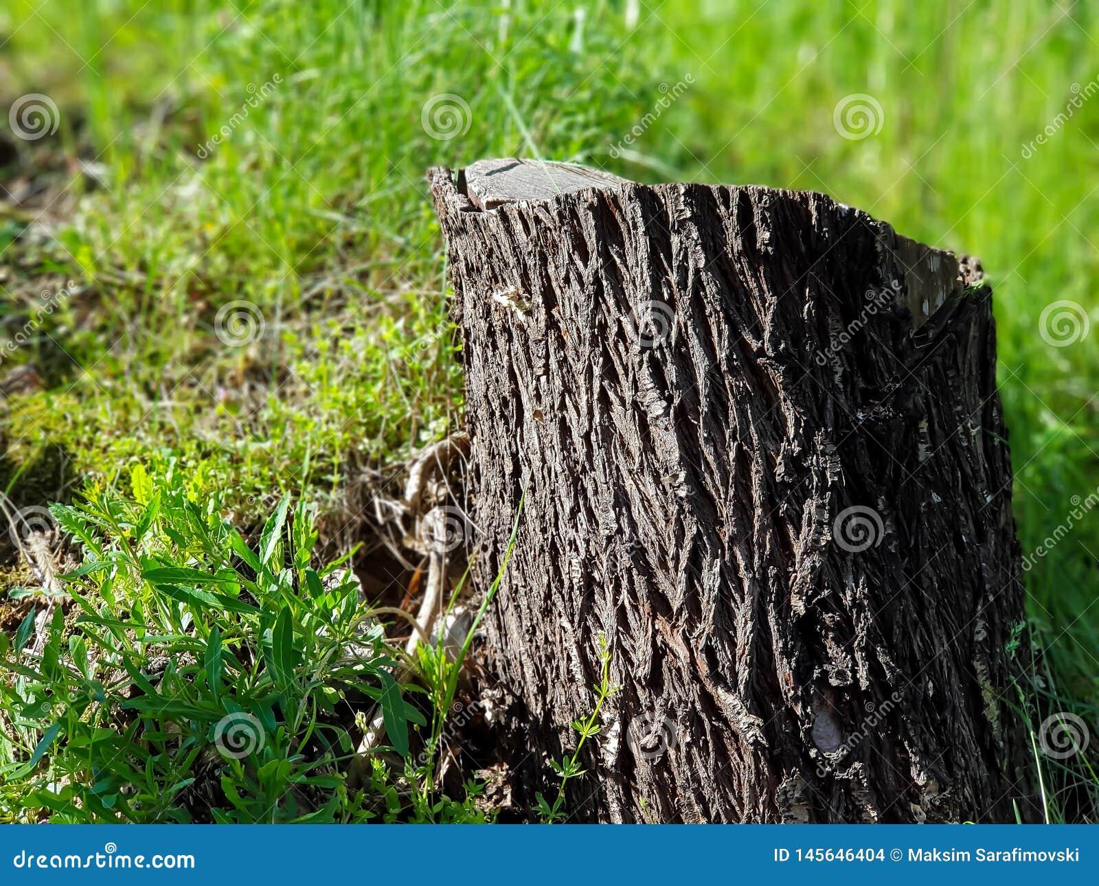 Tocón de árbol en hierba en el parque de la ciudad