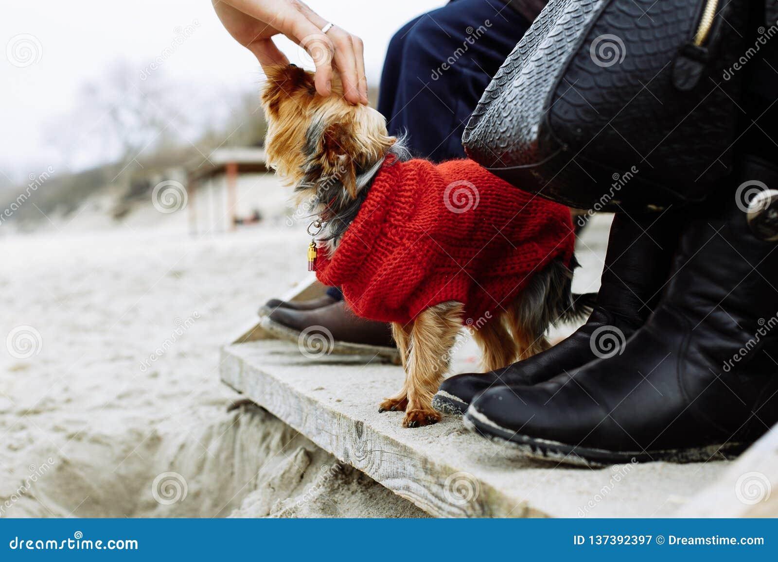 Tocando no cão na praia