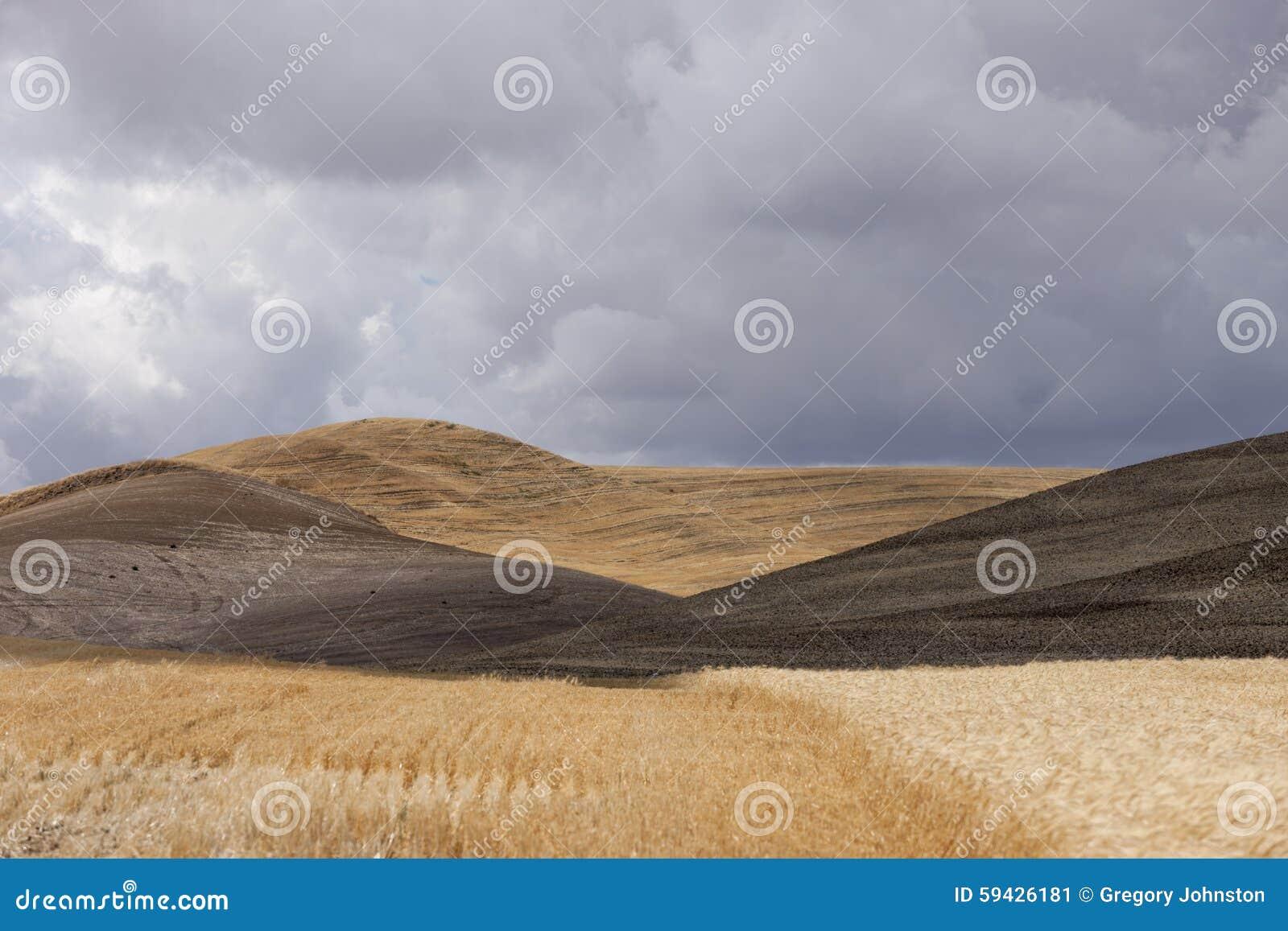 Toczni wzgórza blisko Colfax, Waszyngton
