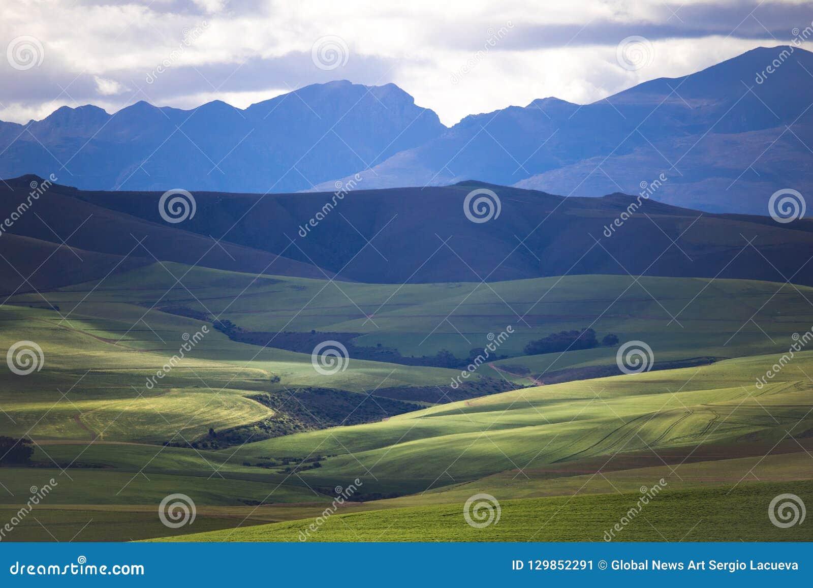 Toczni zieleni rolniczy pola z górami w tle Południowa Afryka - Caledon, Zachodni przylądek -
