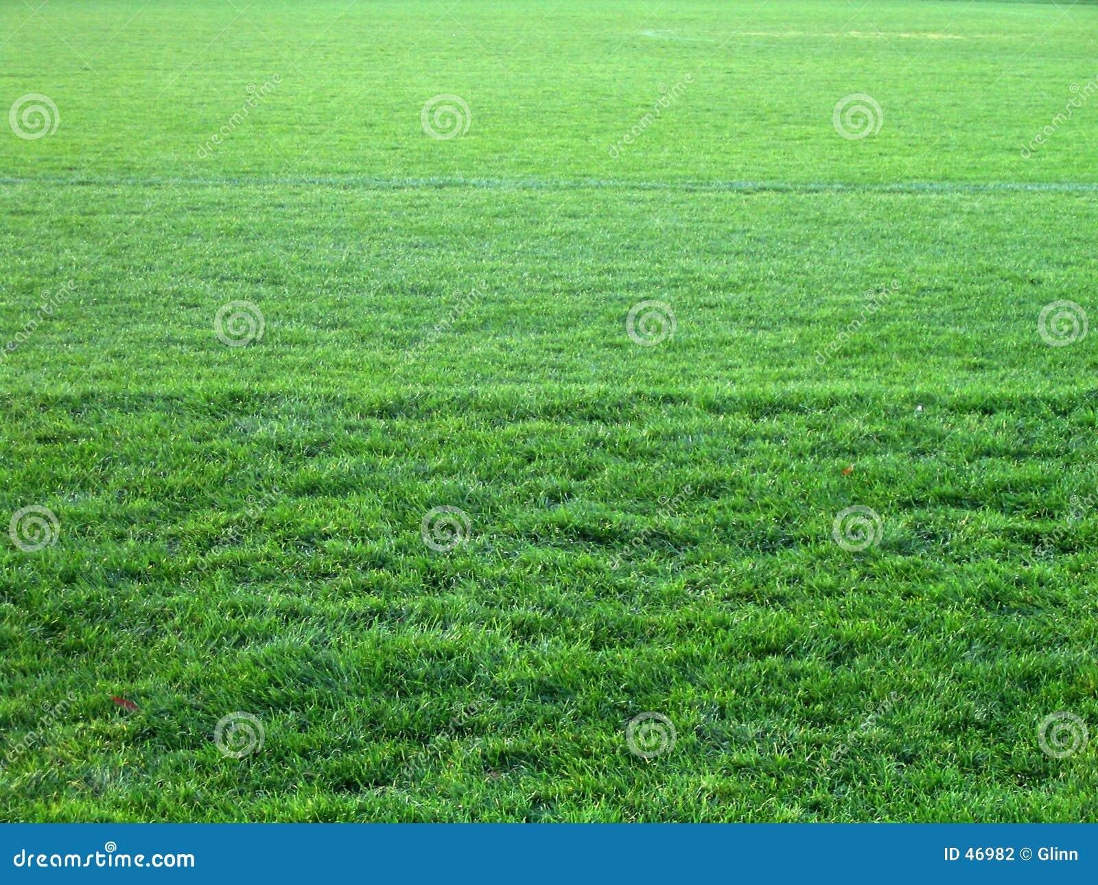 Toda a grama verde