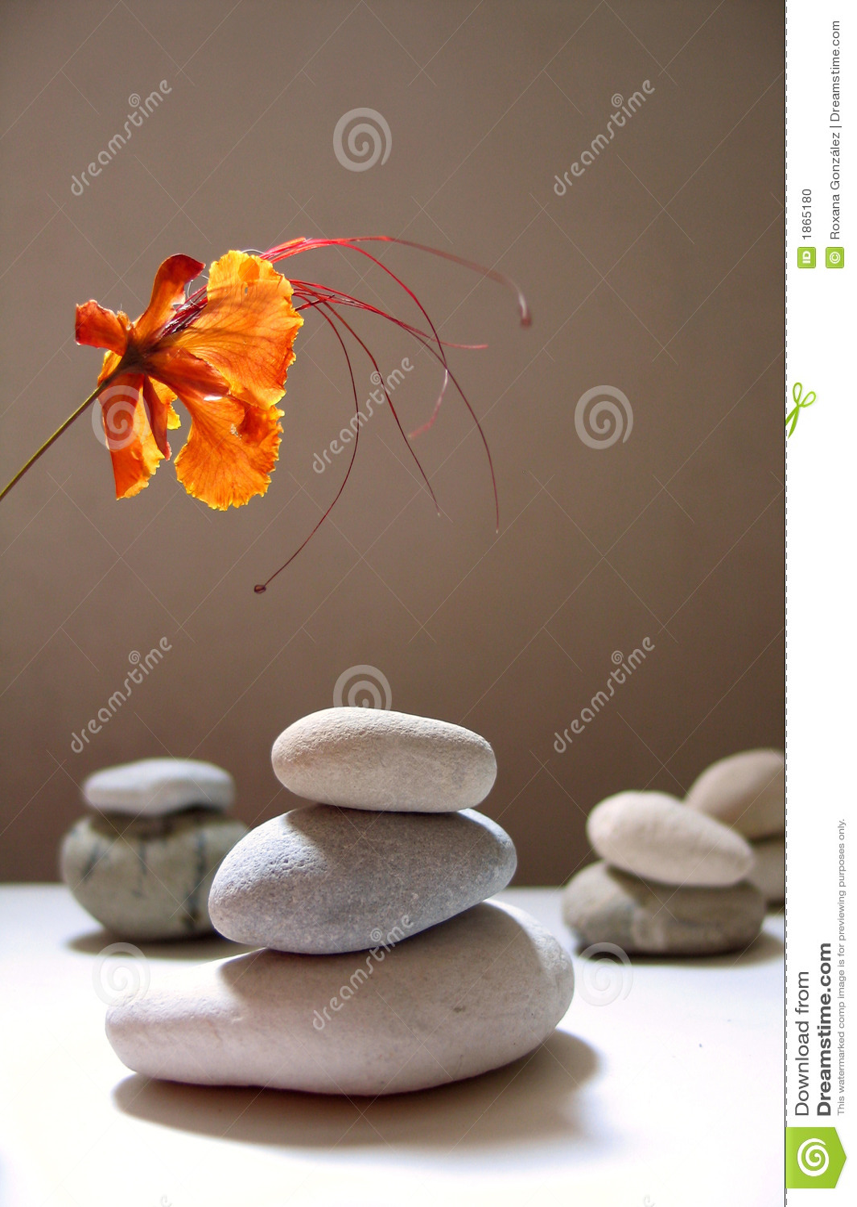 Todavía del zen vida con la flor tropical