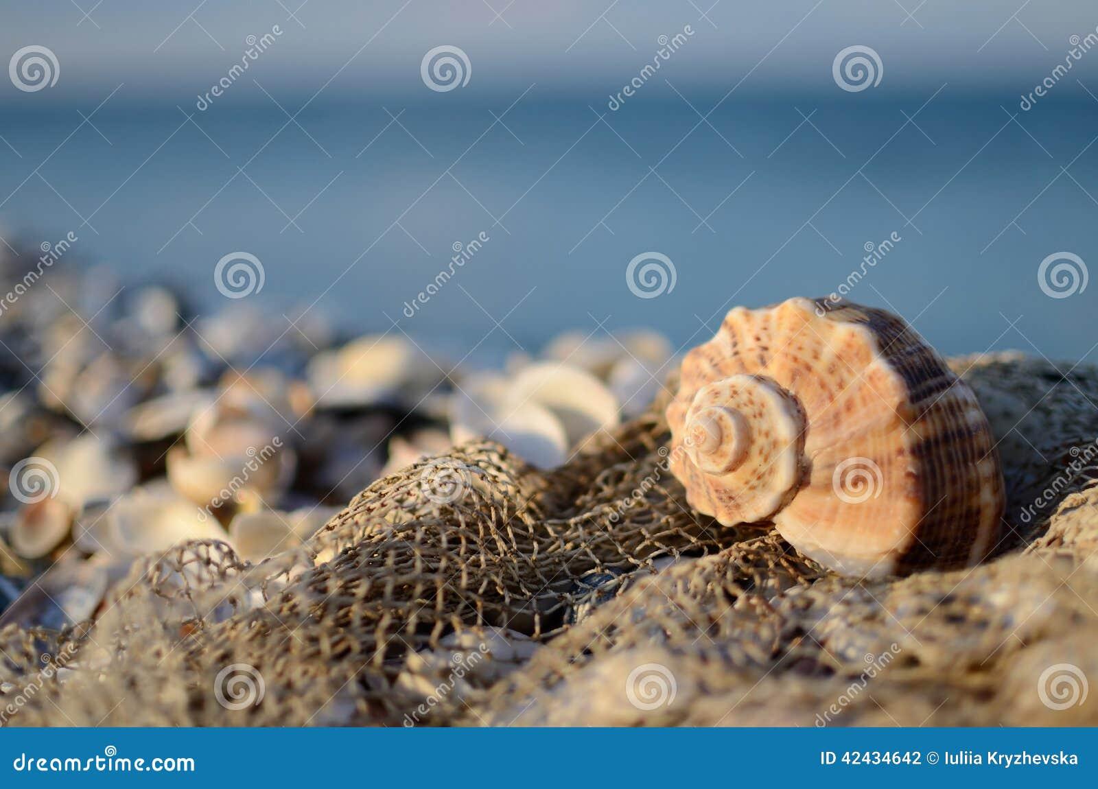Todavía vida con la concha marina y red de pesca en la playa tropical