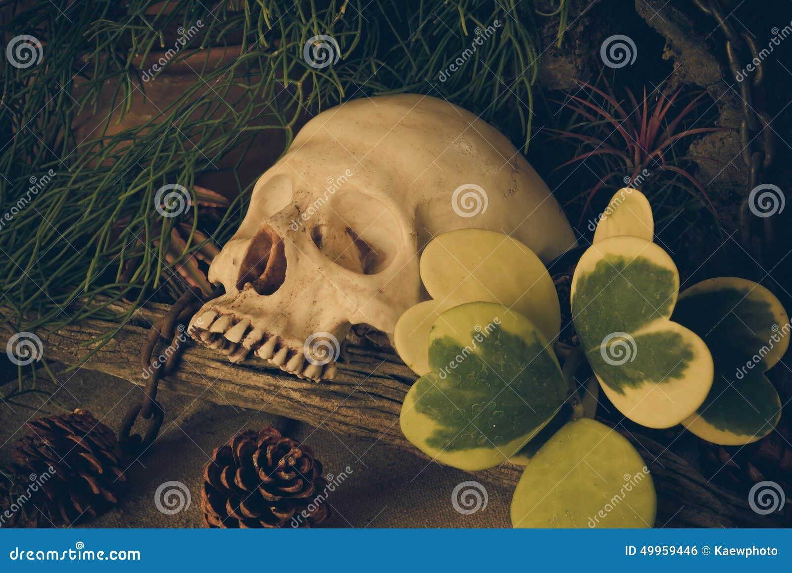 Todavía Vida Con Un Cráneo Humano Con Las Plantas De Desierto Foto ...