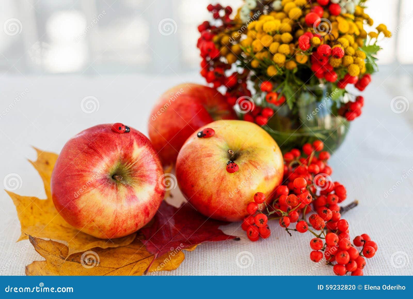 Download Todavía Vida De Manzanas Maduras Rojas En Las Espiguillas Foto de archivo - Imagen de frutas, otoño: 59232820
