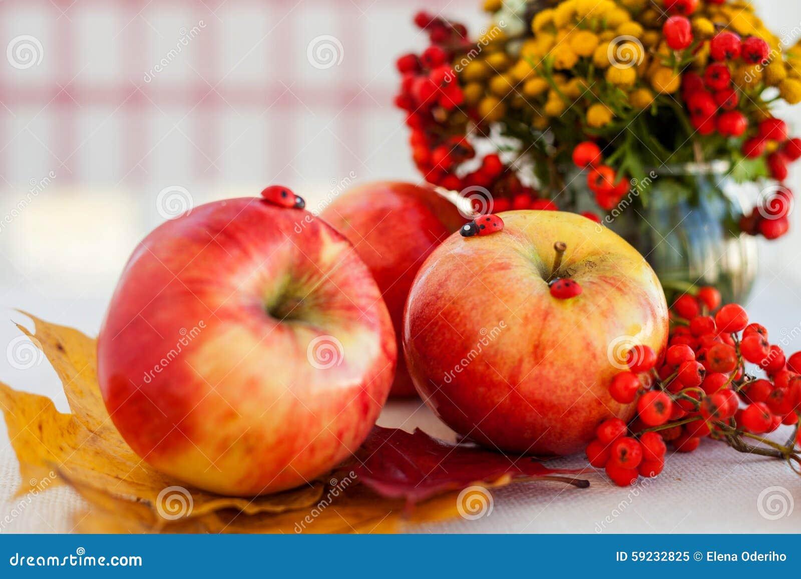 Download Todavía Vida De Manzanas Maduras Rojas En Las Espiguillas Imagen de archivo - Imagen de acoplamiento, crecimiento: 59232825