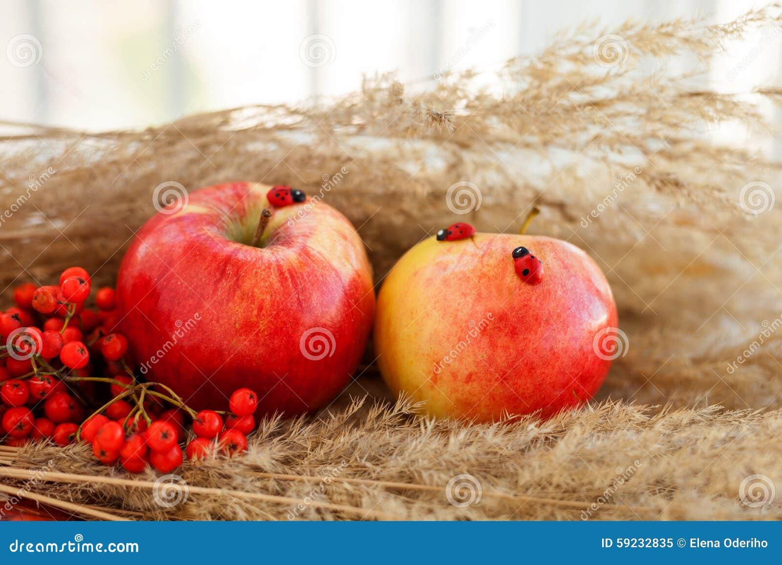 Todavía vida de manzanas maduras rojas en las espiguillas
