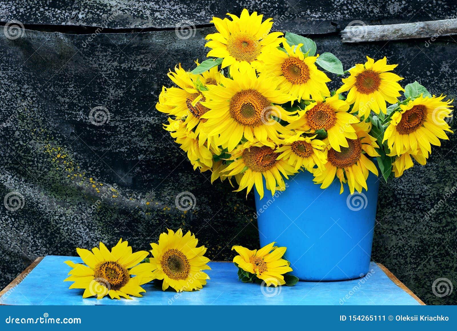 Todav?a vida con los girasoles ramo de girasoles en un cubo vida inmóvil rural del vintage con las flores Todav?a de Grunge vida