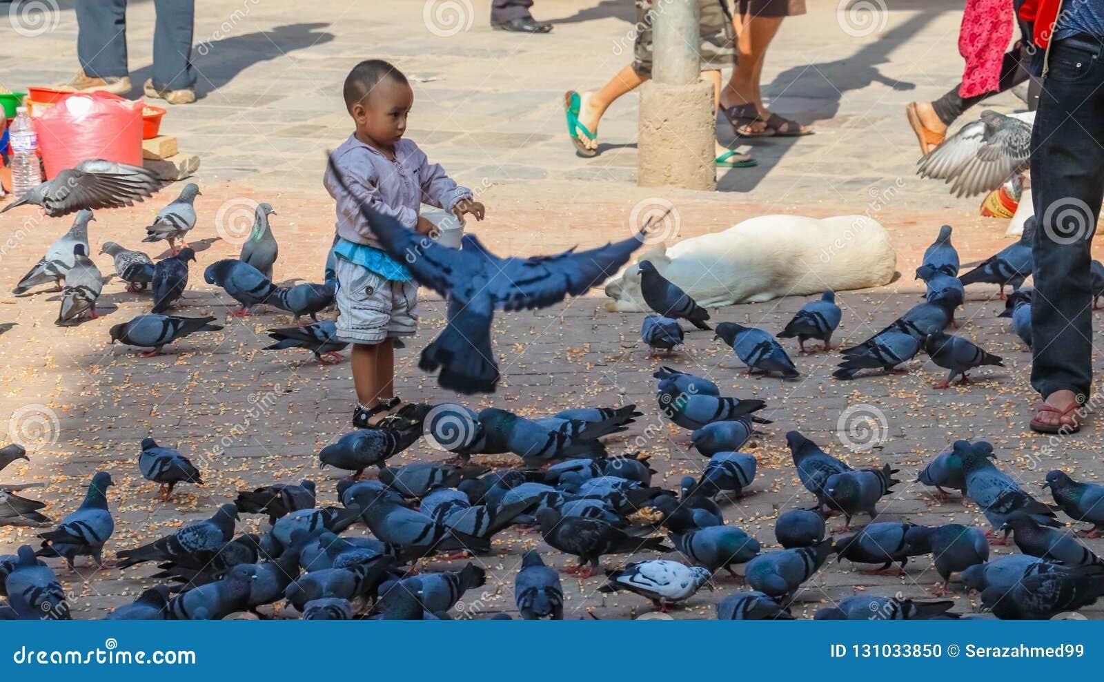 Toddler feeding pigeons