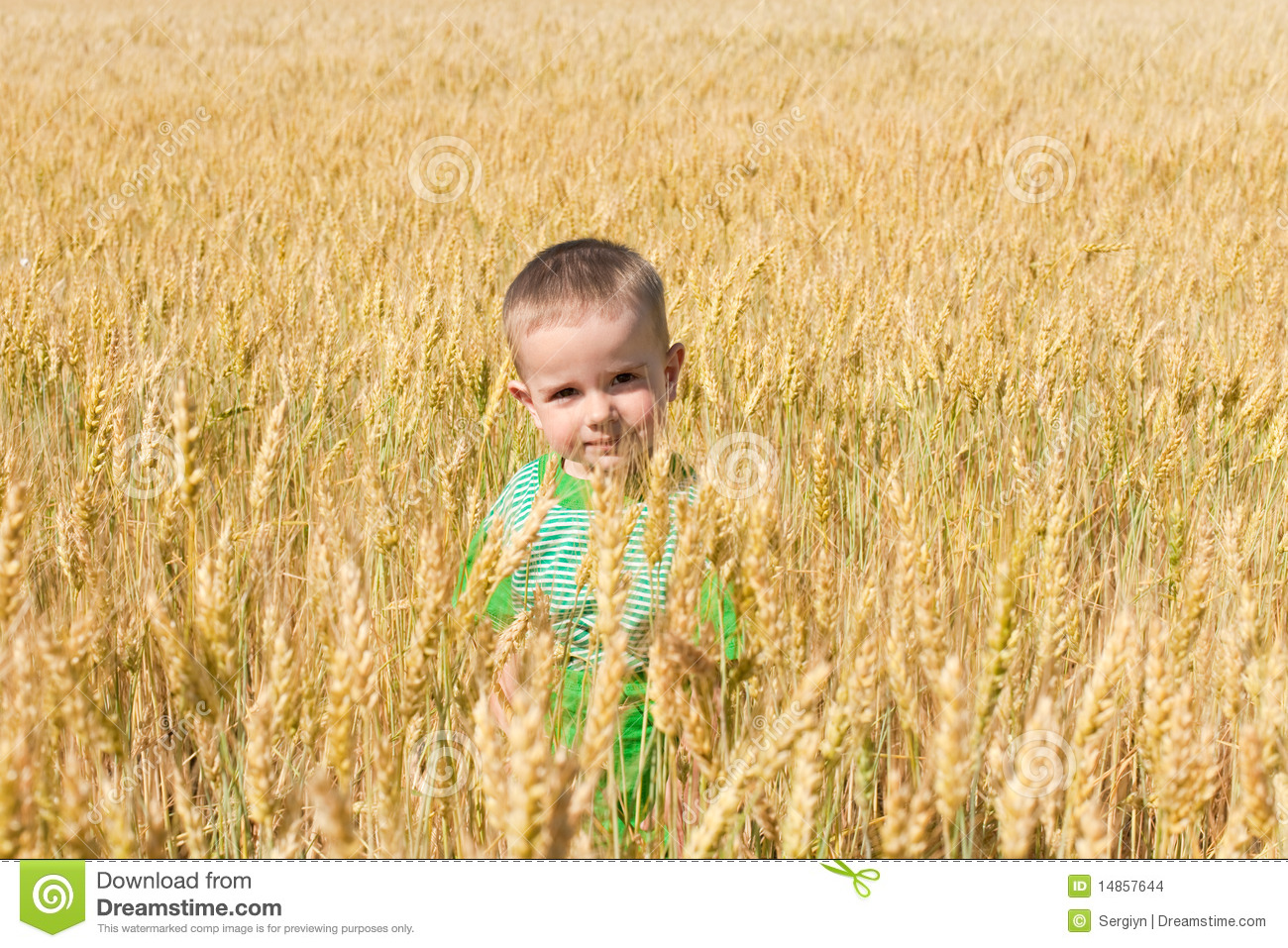 Toddler in the field of wheat