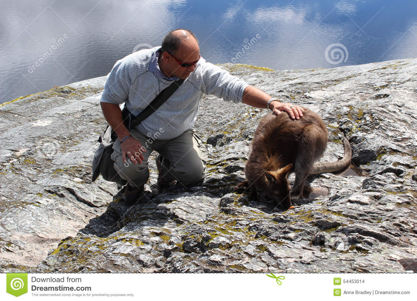 Toerist die een kangoeroe tikken