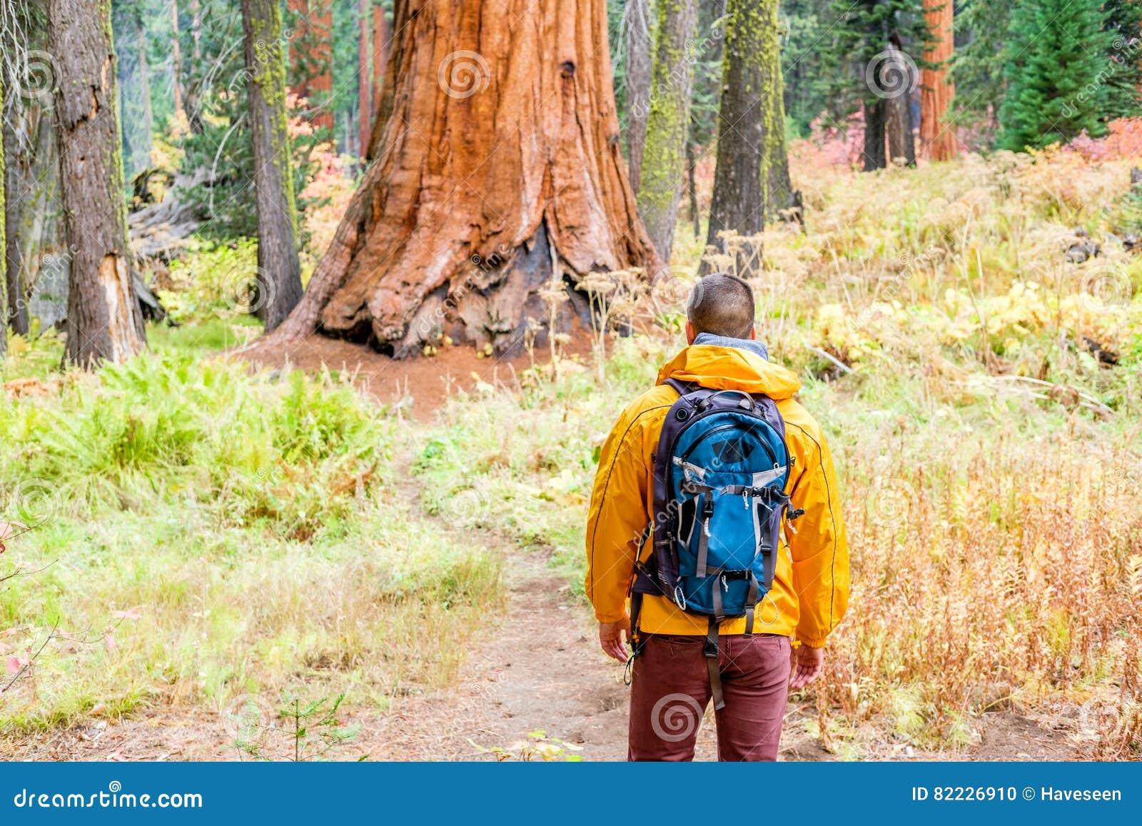 Toerist die met rugzak in Sequoia Nationaal Park wandelen
