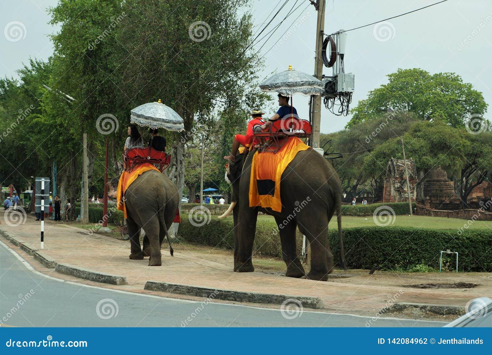 Toeristen die op olifanten terug berijden, Thailand