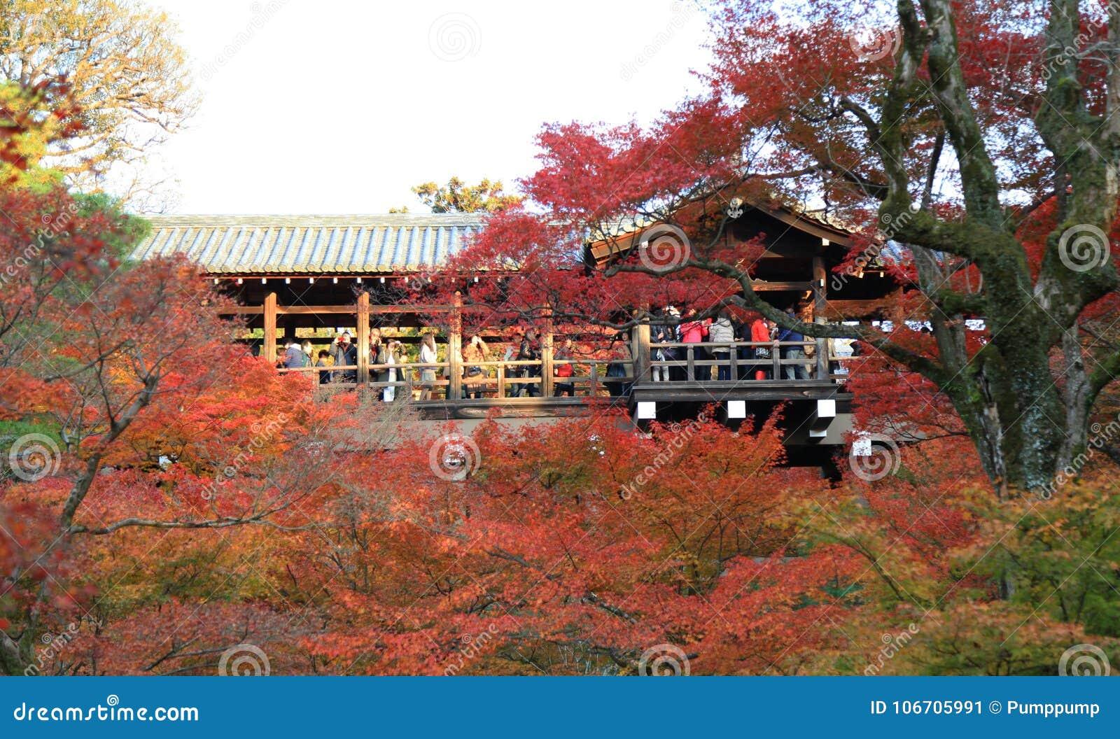 Tofukuji Temple : KYOTO - 25 Nov 2017: Crowds gather at Tofukuj