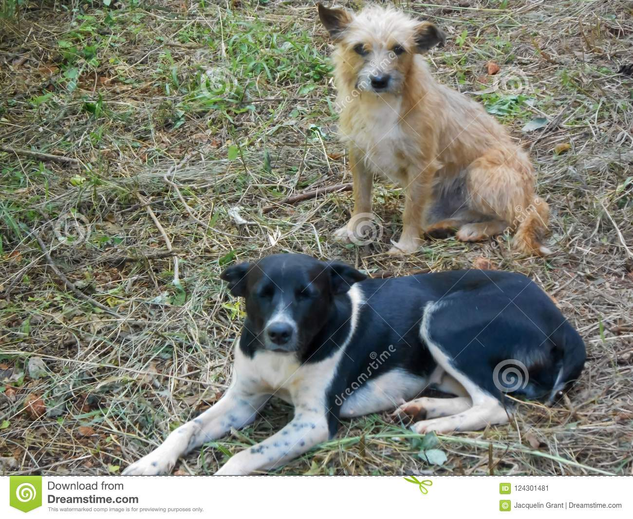 Together Cute Mongrel and Terrier