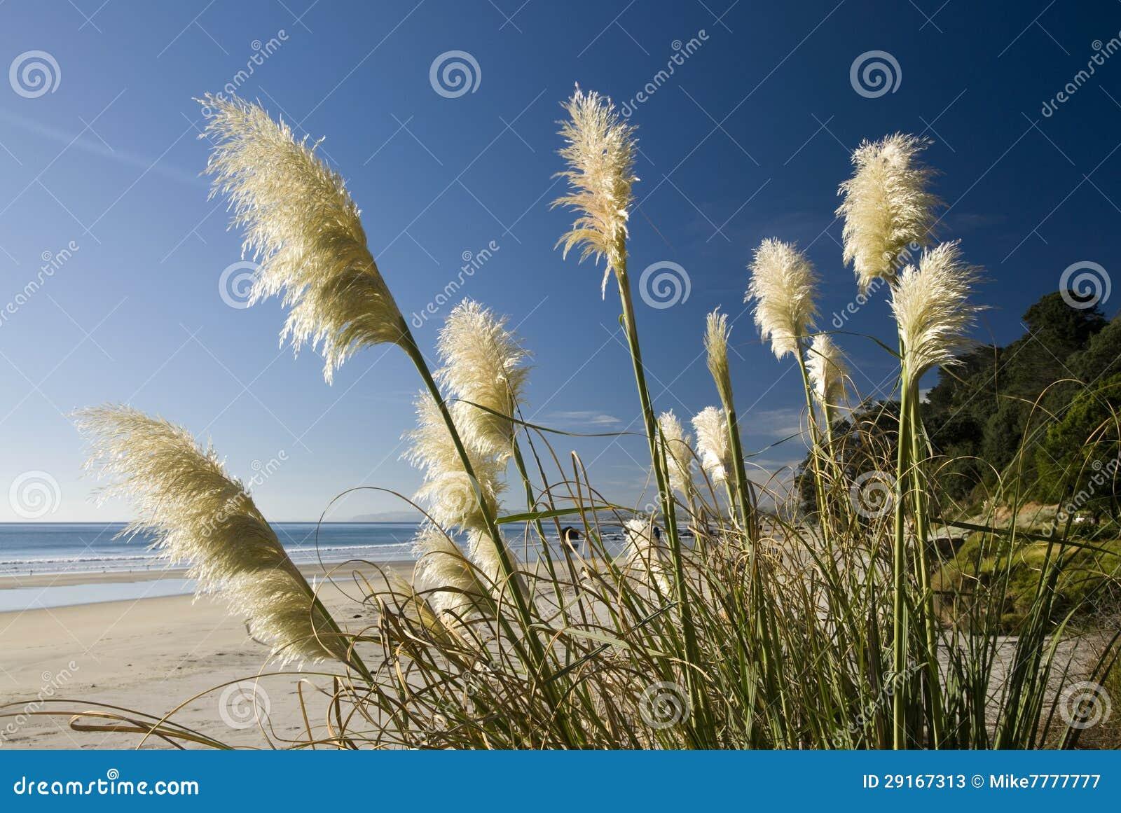 Toi Toi Anlage, Strand, Neuseeland. Stockbild - Bild von ...