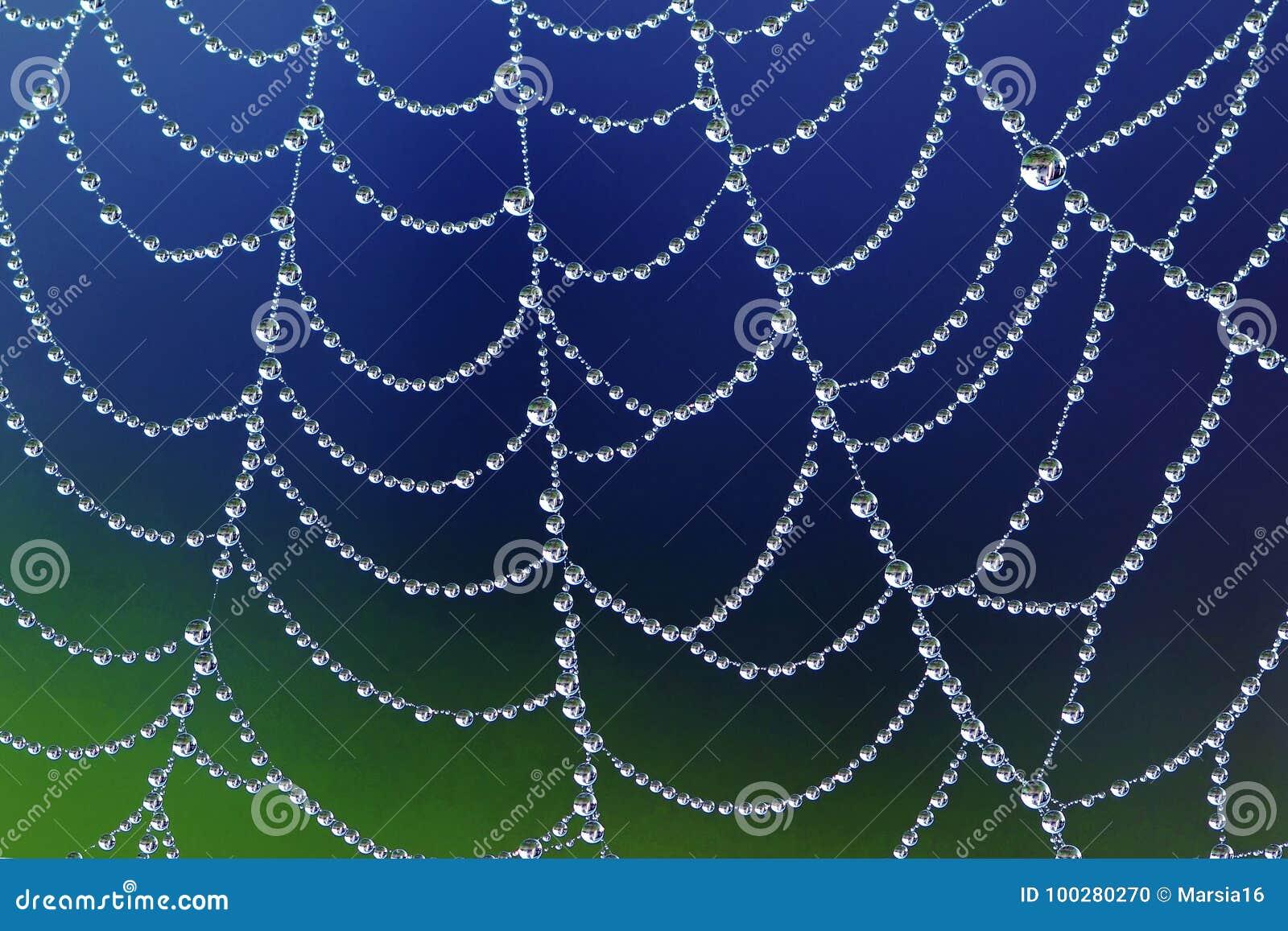Toile d araignée avec des baisses de rosée