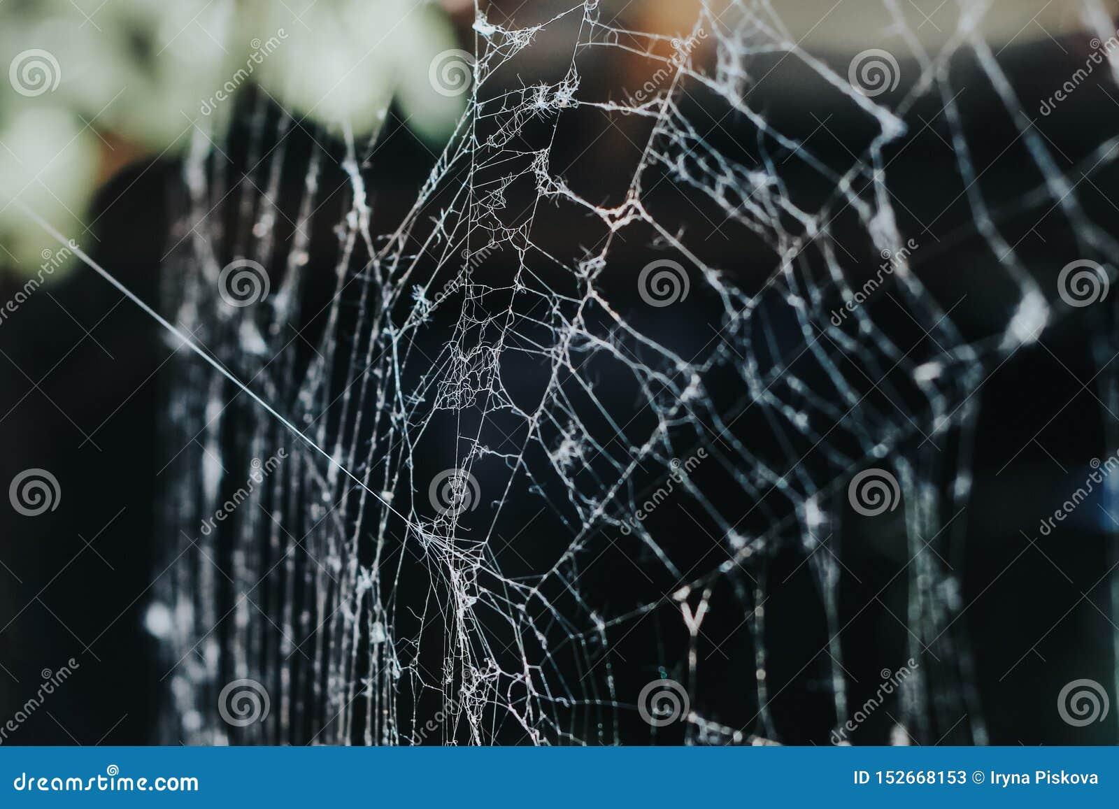 Toile d araignée pendant le matin