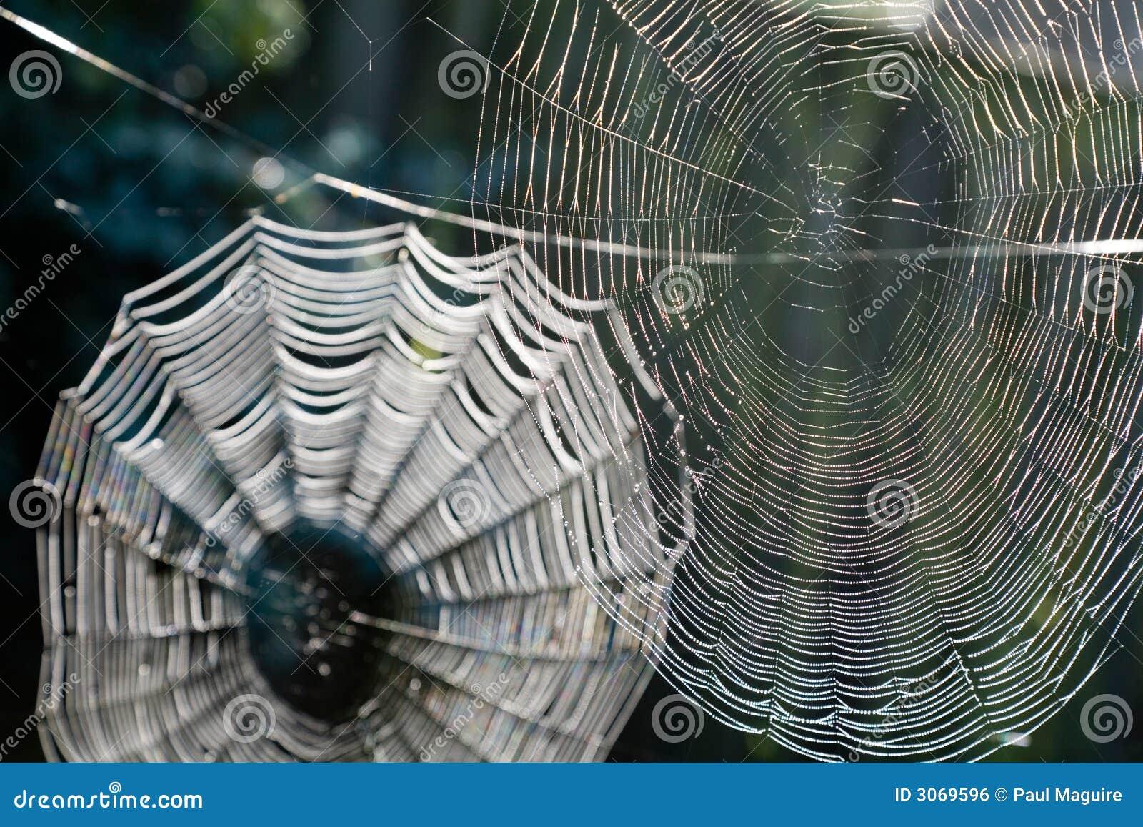 Toiles d araignee