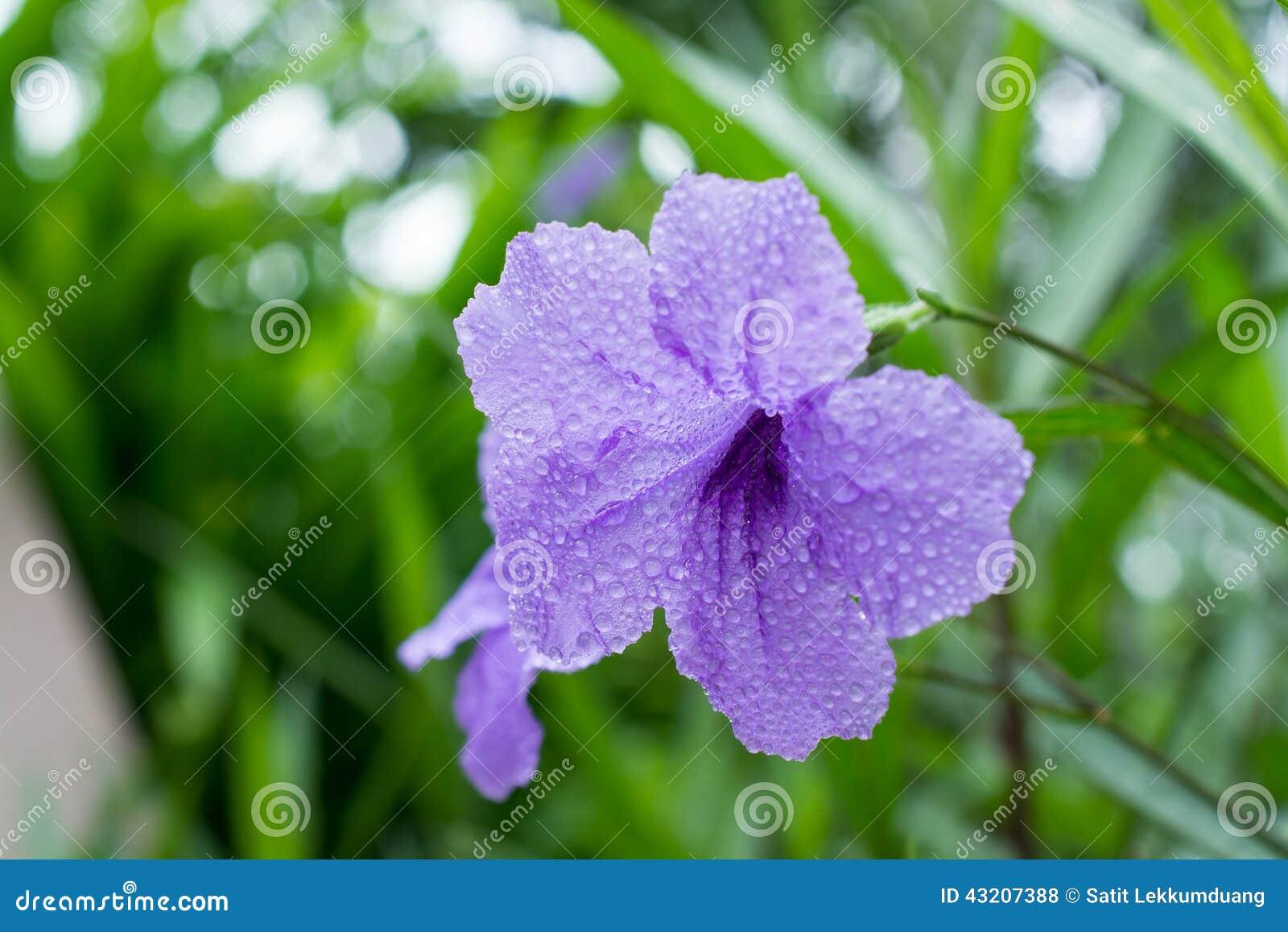 Download TOIS blommor arkivfoto. Bild av horisontal, leaf, blodsugare - 43207388