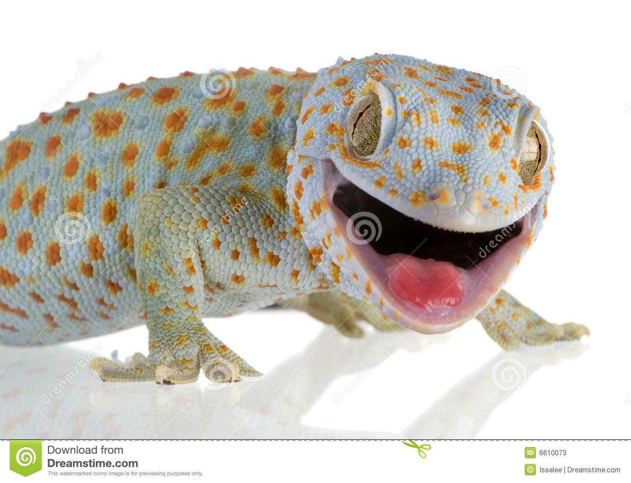 how to catch tokay gecko