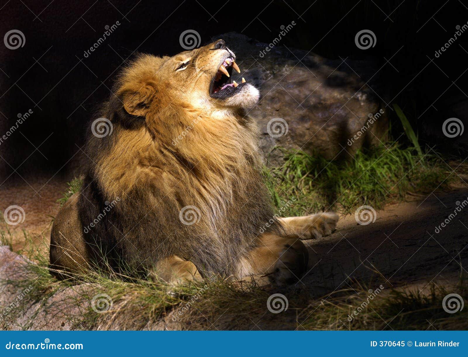 Tokig lion