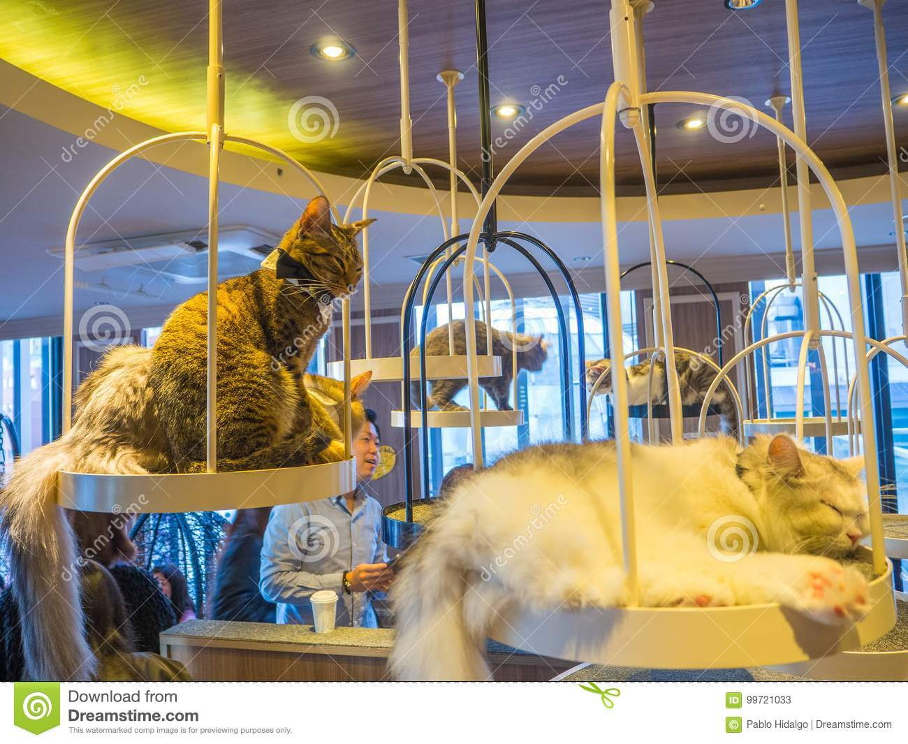 TOKYO, JAPAN - JULY 17, 2017: Unidentified people taking pictures of the little cats, purebred kittens for sale in a pet