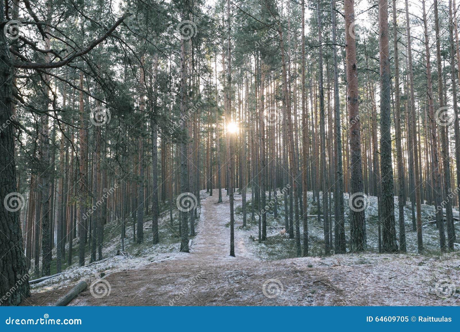 Tolkuse bog, Estonia