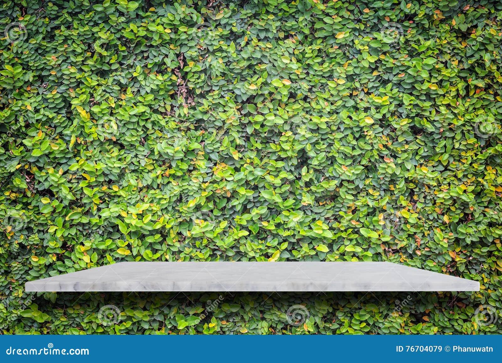 Tom överkant av naturliga stenhyllor och grön modellväggbackgr