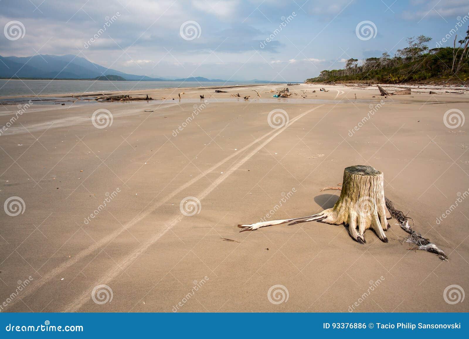 Tom strand med stammar i sand- och weelfläckarna i Brasilien