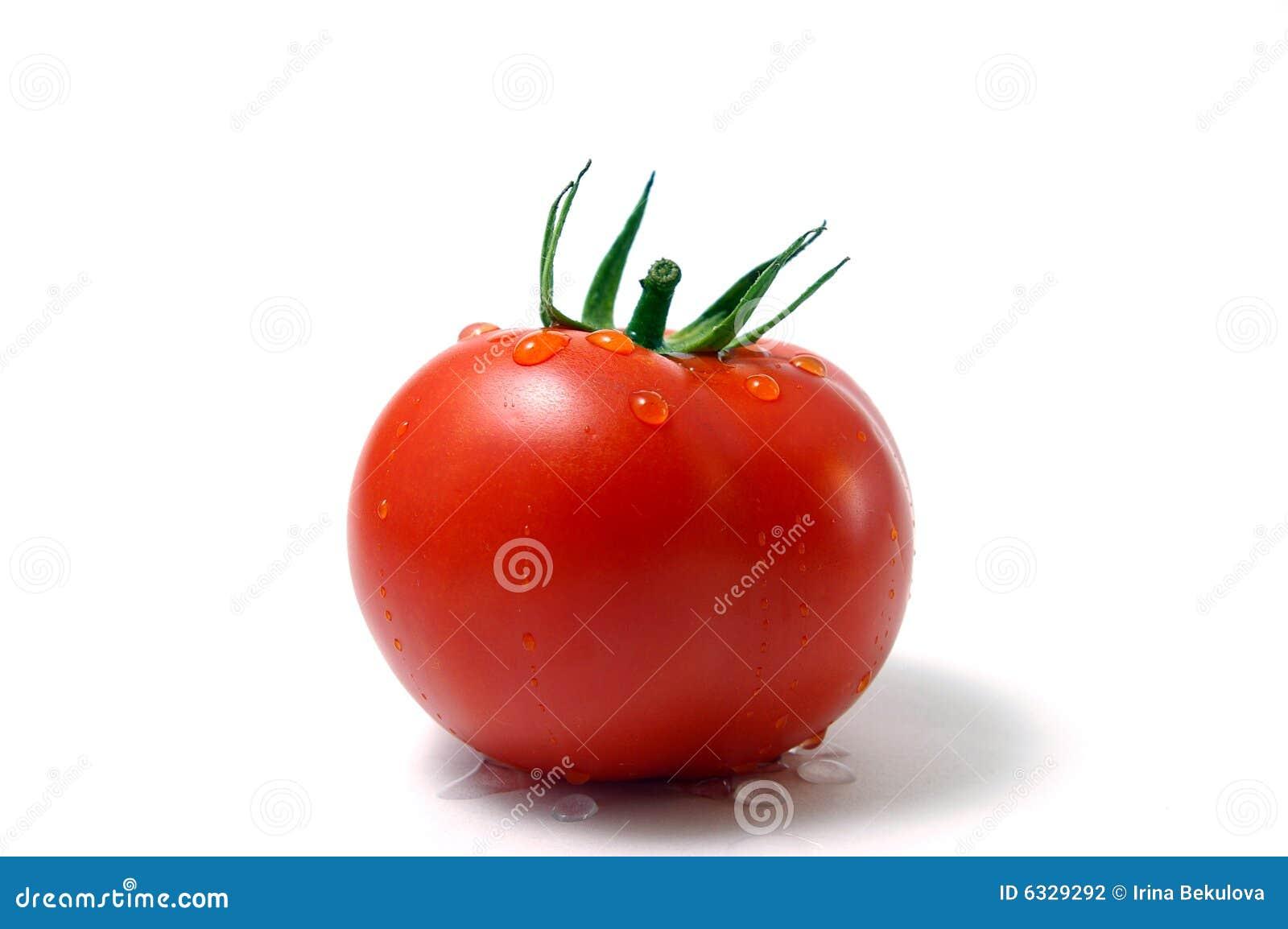 Tomaat met daling van water