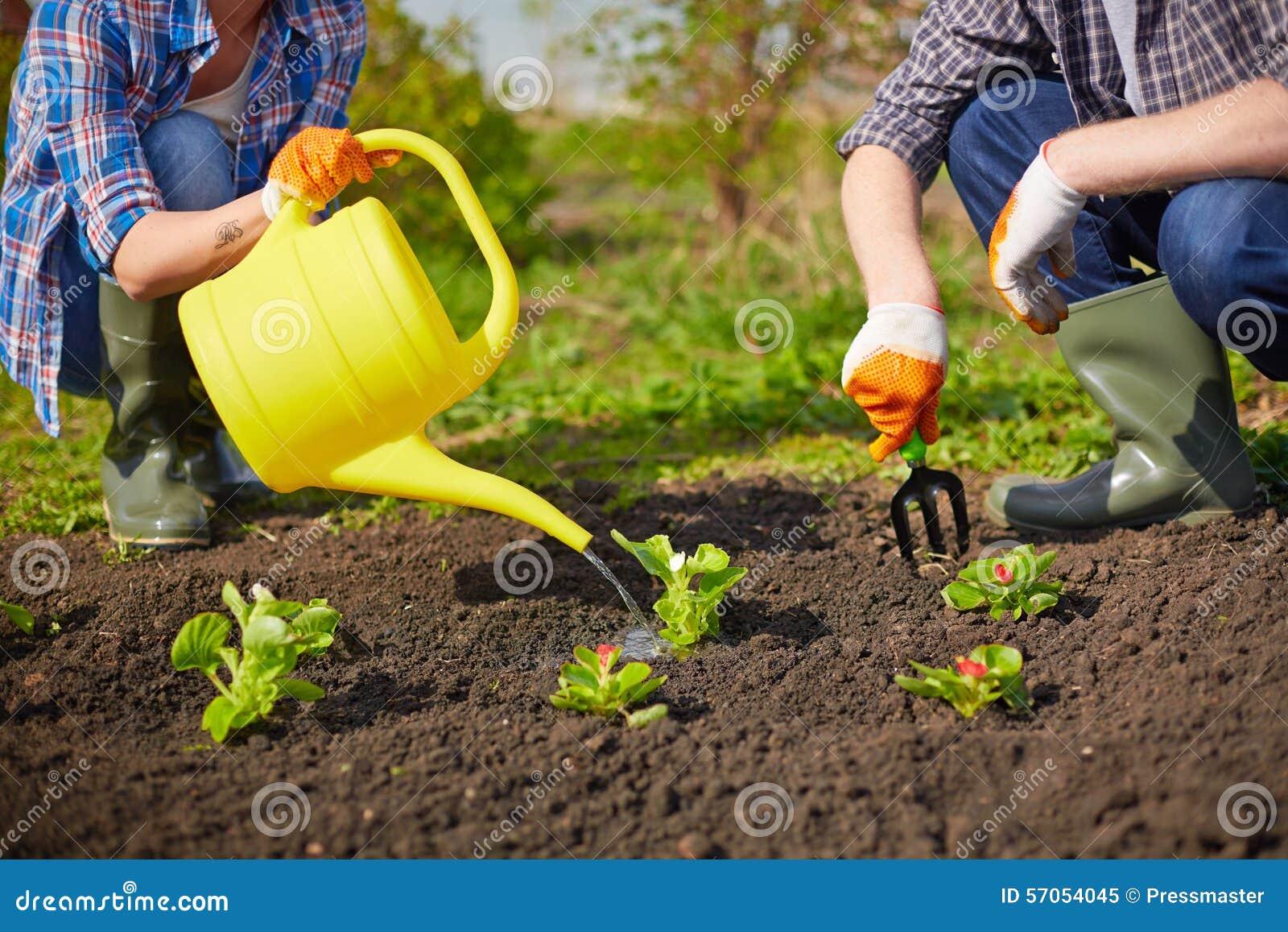 Tomar el cuidado de plantas imagen de archivo imagen de - Cuidados de una hortensia ...