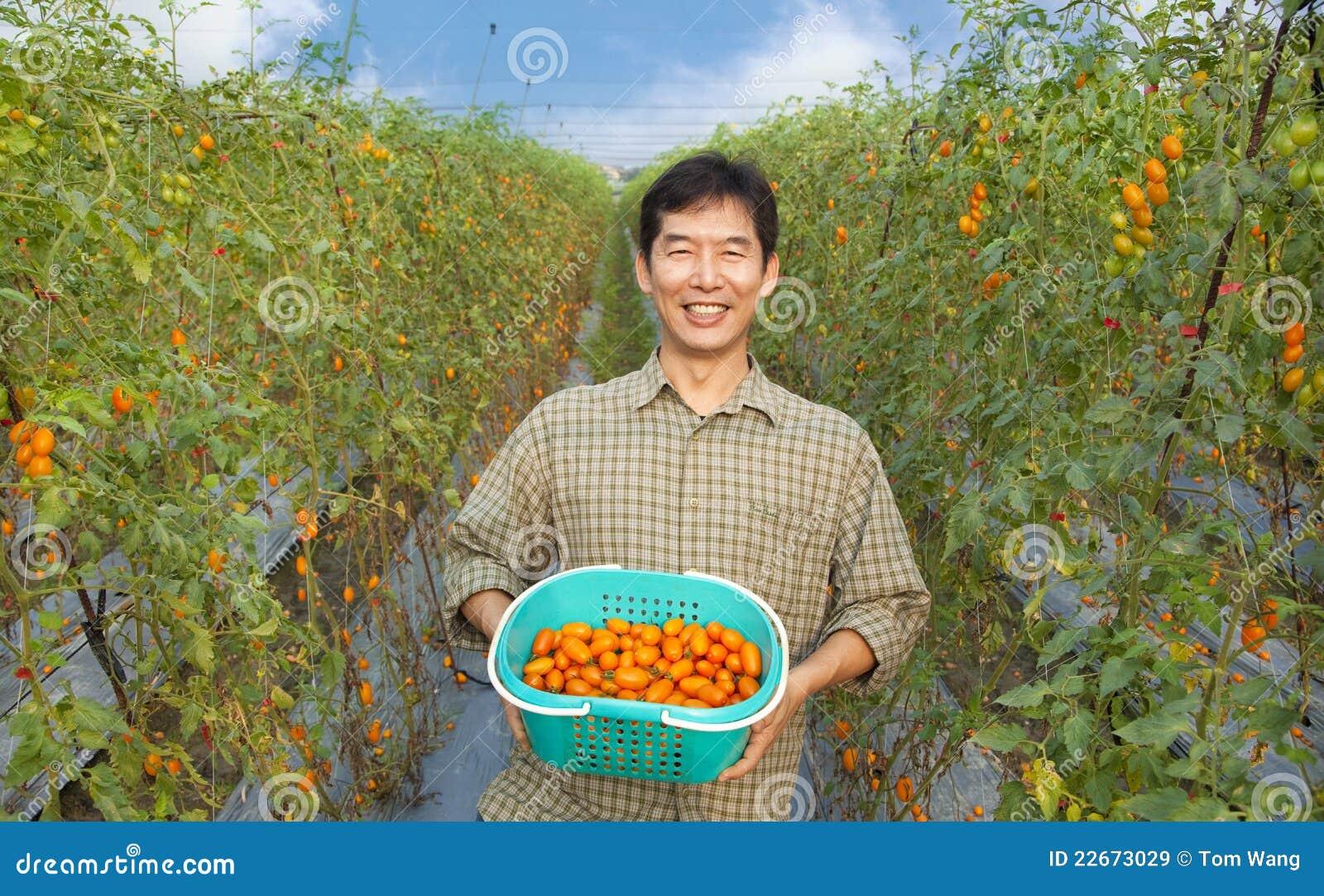 Tomate asiatique heureuse de fixation de fermier