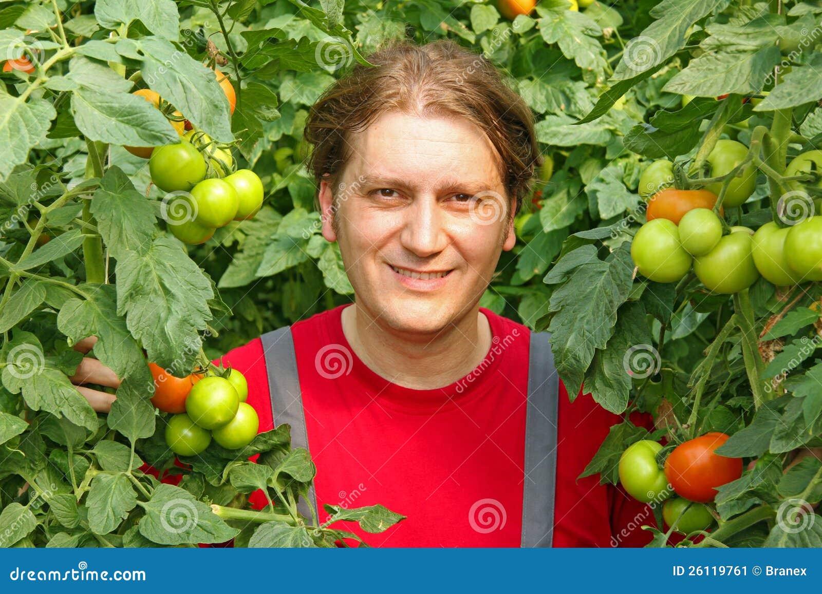 Tomate feliz da colheita do fazendeiro
